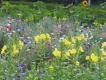Insekten-Bienenpflanzen